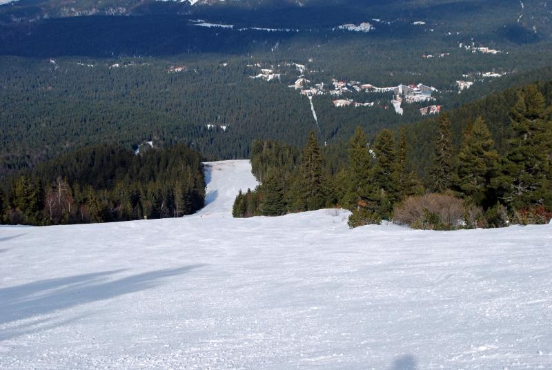 Ski slopes with view of pine forest at top of Mount Mousala