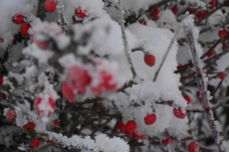 Hawthorn Cottage - every season brings its own joys