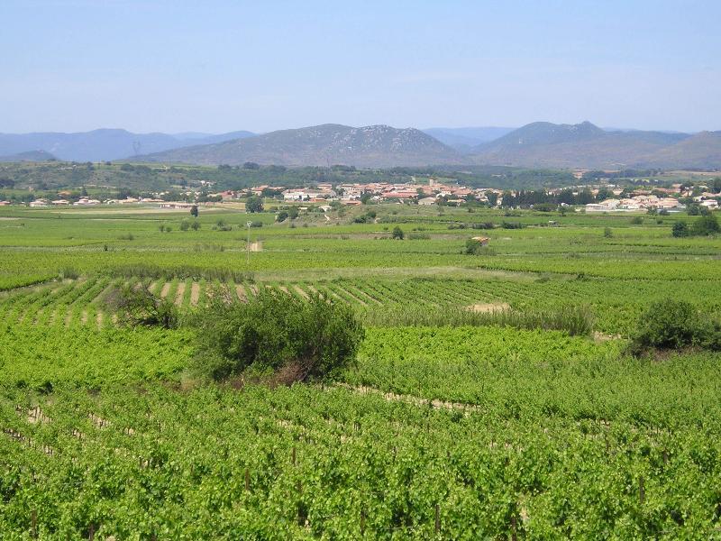 View across local vineyards