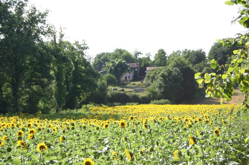 La Voute surrounded by sunflowers