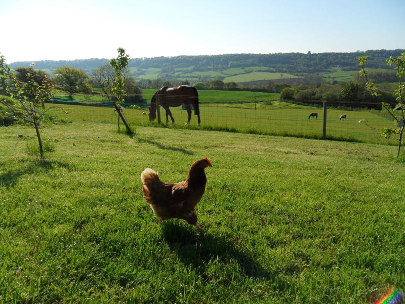 Meet the residents. And if the hens are laying well, sample their eggs.