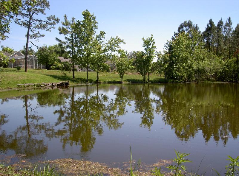 Pond behind the villa
