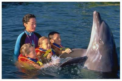 Swim with the Dolphins at Vallarta Adventures
