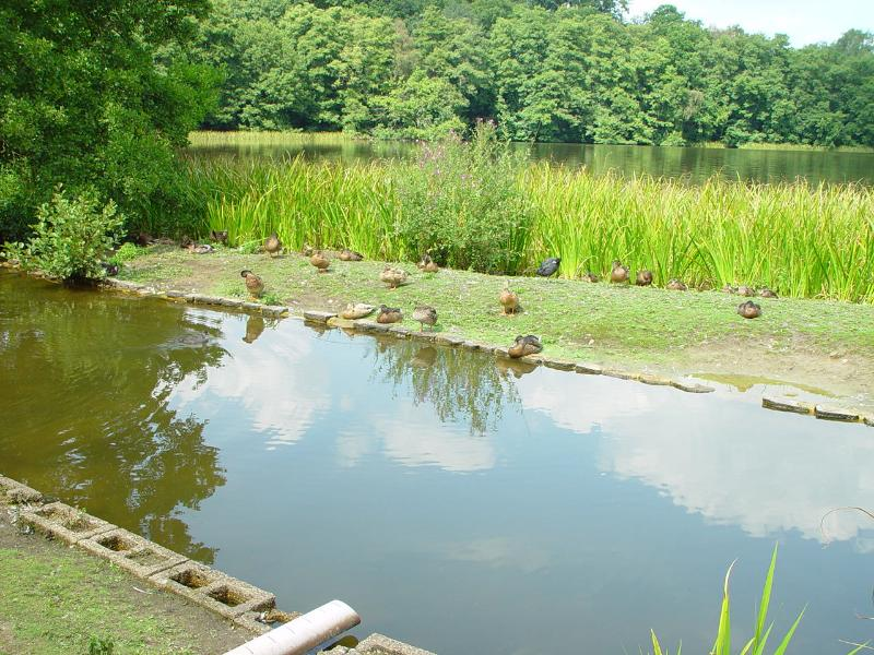 Fresnham Ponds