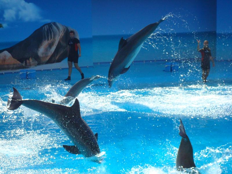 Discover the dolphin, seal and sea lion shows at Zoomarine, the Algarve's best family theme par