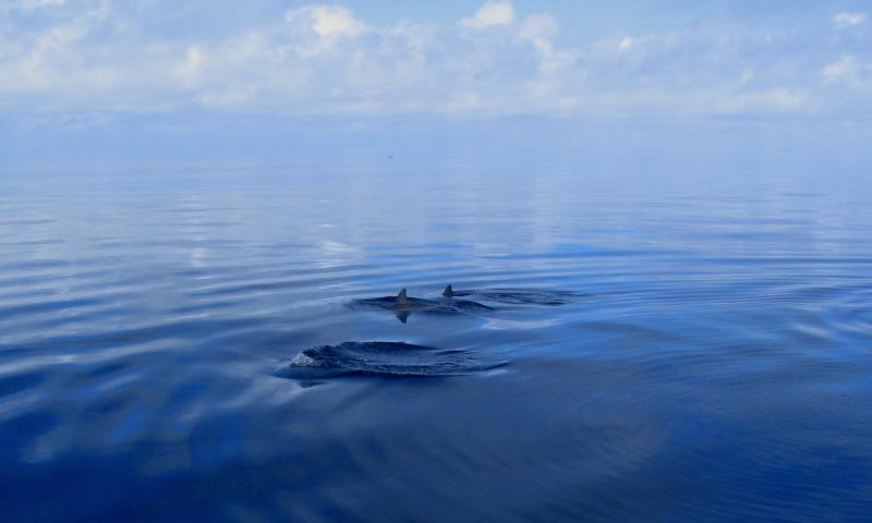 Nuestro acompañante amigable delfín!