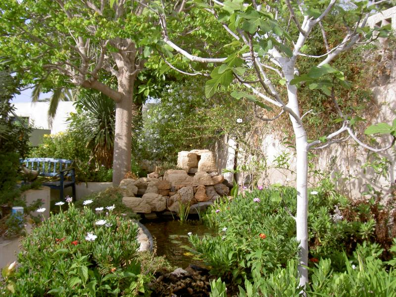 Private garden at villa with raised fishpond
