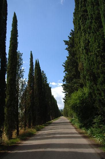Cypress avenue leading to La Fonte
