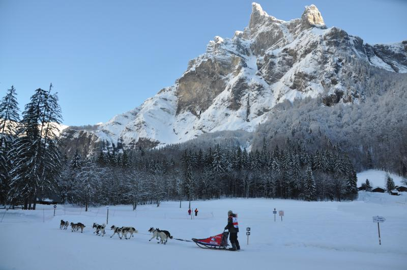 The annual dog sled race - 'Le Grand Odyssee' - which passes through Sixt and the Fer a Che