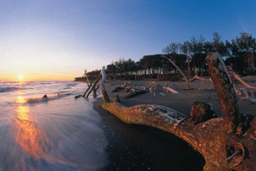 Alberese beach