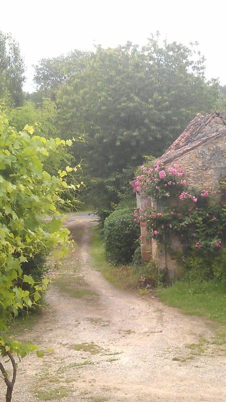 view down driveway