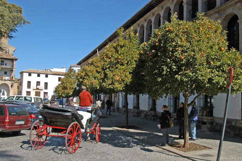 Orange trees in Ronda