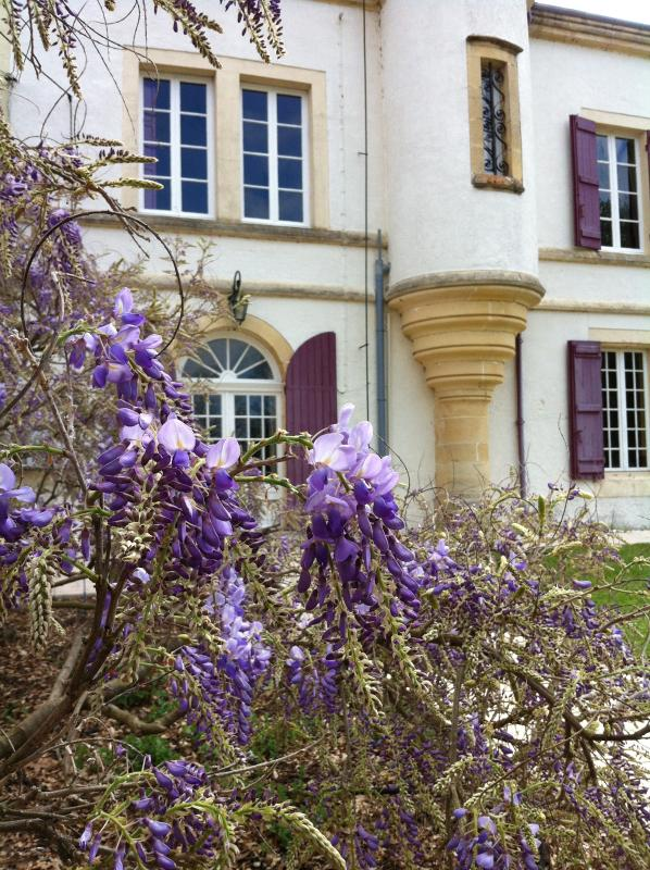 Wisteria in the front garden