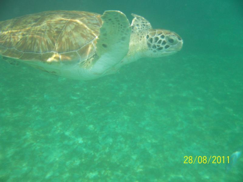 Swim with the Turtles - near the Lonestar