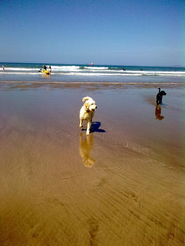 Eddie & Sula on Broad Haven beach