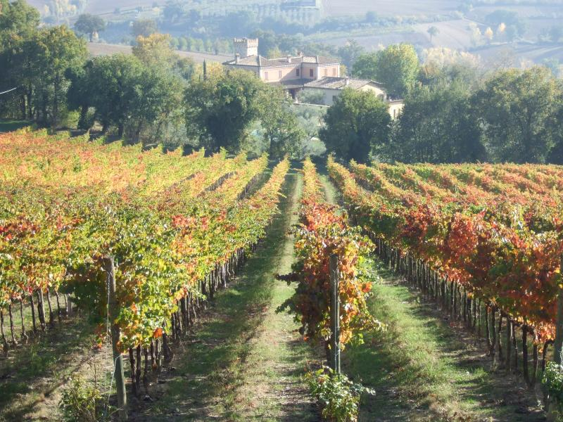 Vineyards of Montefalco, home of Sagrantino wine