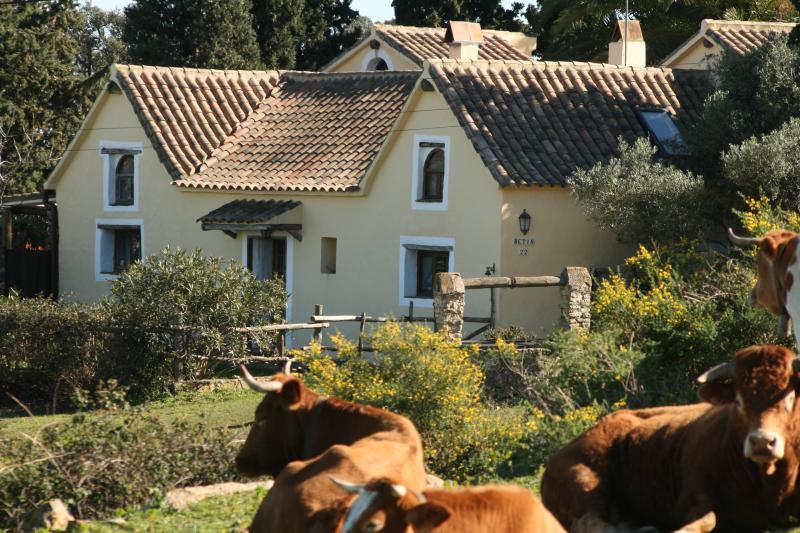 Casa Amarilla and local 'wild' life