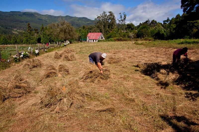 Harvesting Hay at Quinta das Colmeias