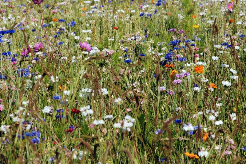 Blumen in den umliegenden Feldern