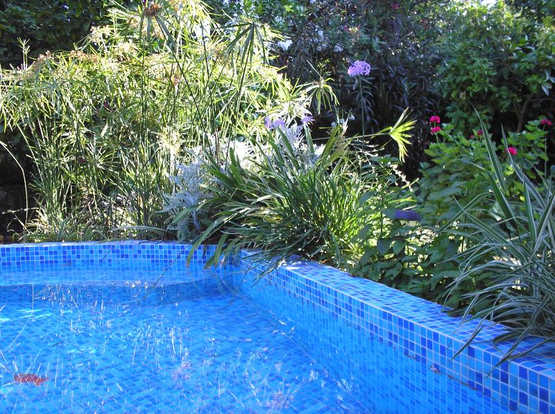 sparkling splash pool set in herb garden