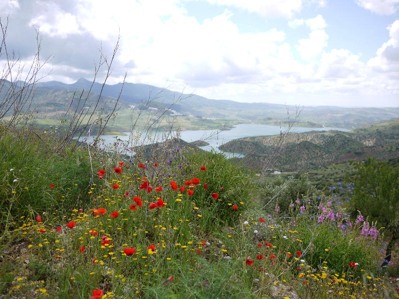 Poppies with Zahara lake in the distance.
