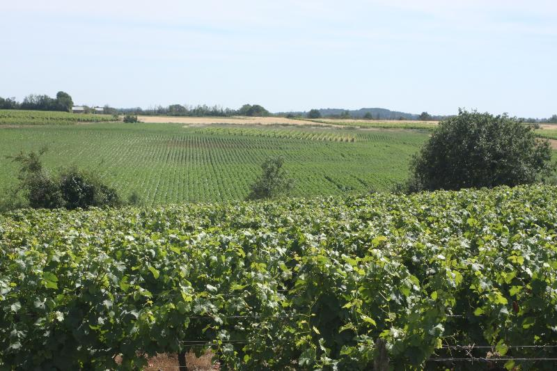 The vines at Les Roches