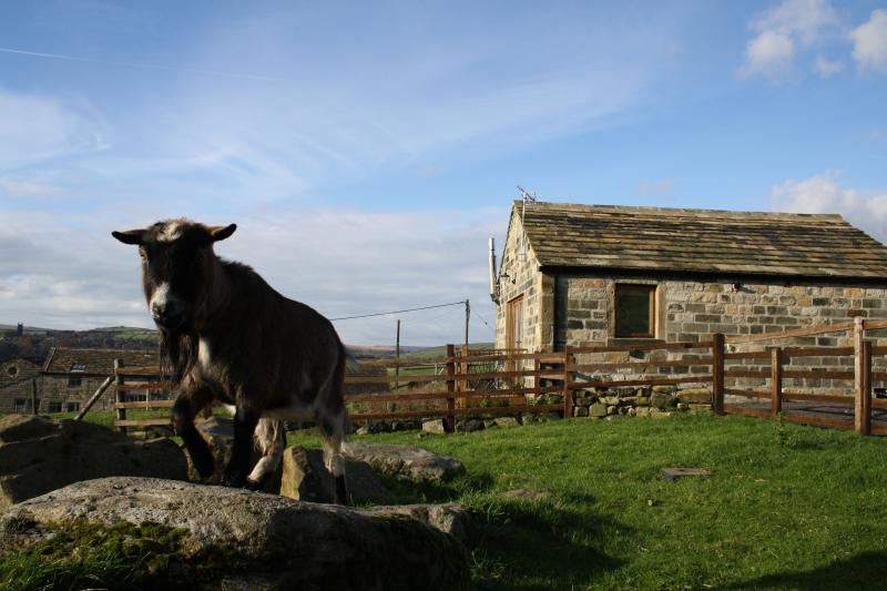 Awesome views & seclusion, neighbour Dave the goat, yet only one mile from vibrant Hebden Bridge!