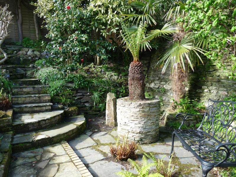 Steps and tree fern