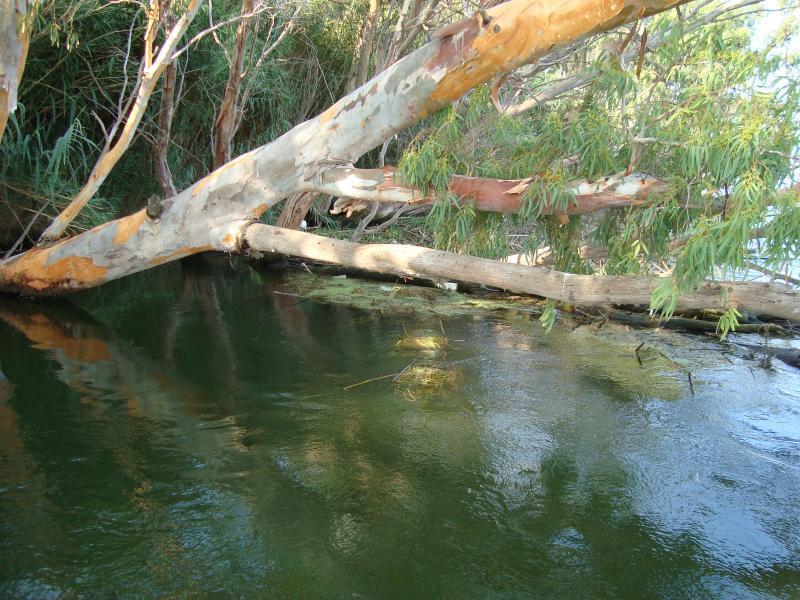 Calme dans le fleuve Ebre