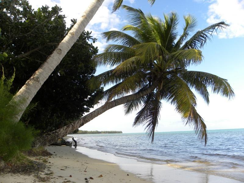la plage de pandanus
