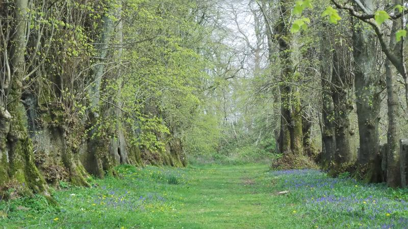 bluebells at crom castle nearby