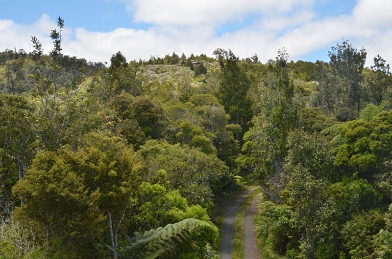 Private 1 km gated driveway to Fern Ridge Hideaway