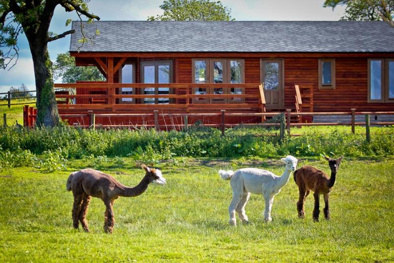 Lake View Lodge with some of my Alpacas