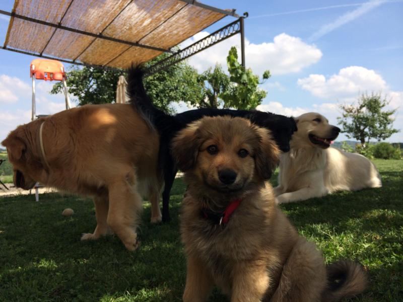 Nanà the puppy