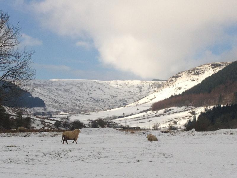 A tranquil winter scene entering Cwm Penmachno