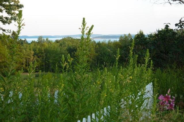 Distant views of water from property
