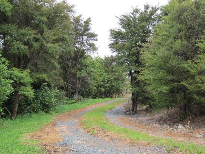 Private, bush-clad driveway