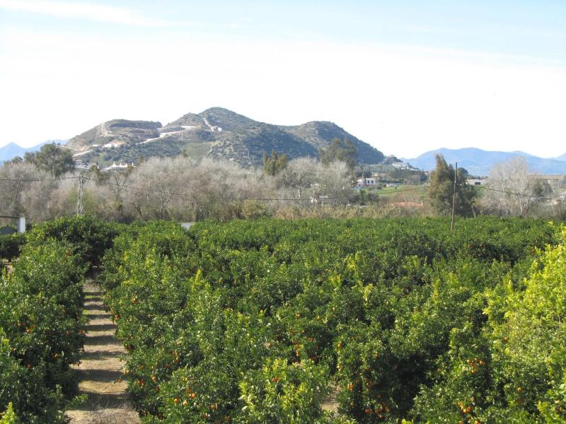 Views from terrace over the orange grove