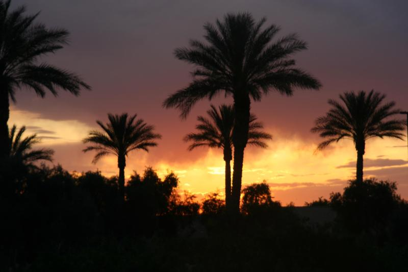 Arizona Palm Tree Sunset!
