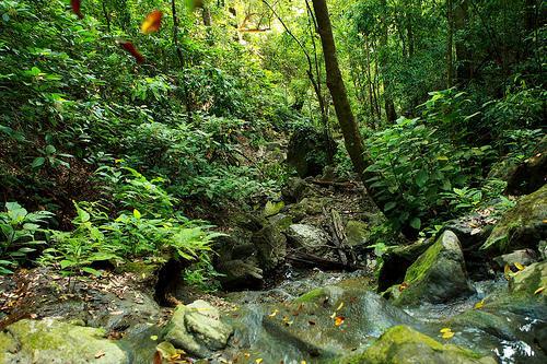 a nearby creek