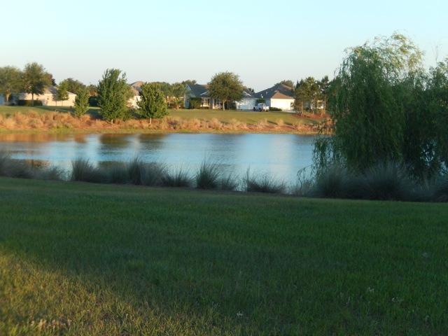 Vista del estanque desde el patio trasero.