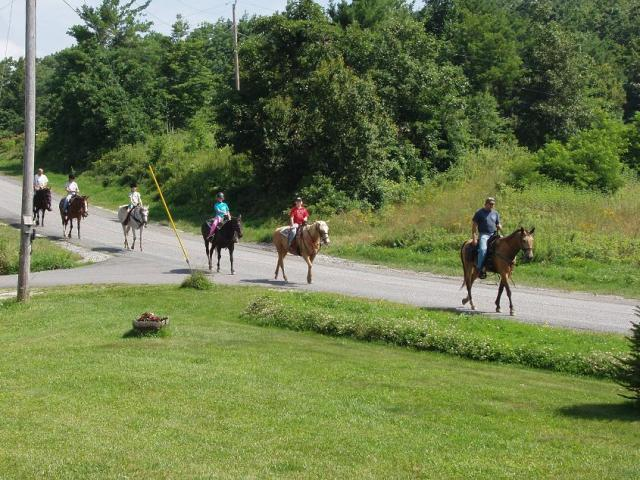 Horses riding by in front of the B&B