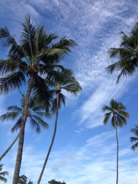 Beautiful blue skies and coconut trees