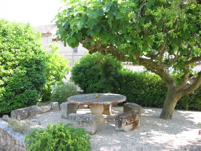 round table under the fig tree