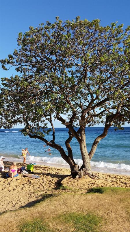 Un albero di ombra a Poipu Beach,