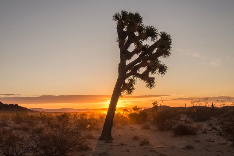 Joshua Tree and sunrise on cabin land