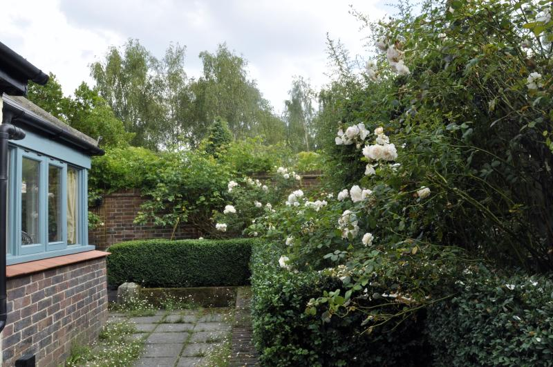 Scented roses in bloom in Pippin's courtyard garden