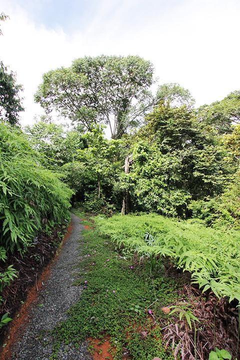 Private jungle trail