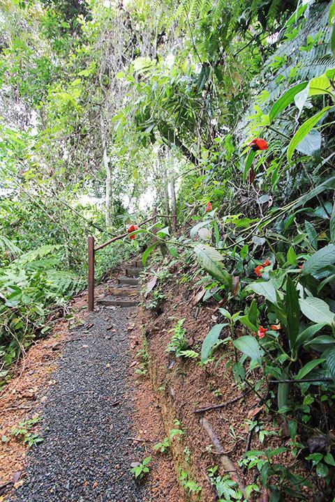 Jungle trail in bloom