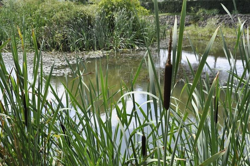 The pond with wild life: frogs, dragonflies, birds...
